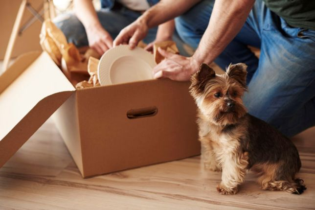 How to Manage a Move with Pets